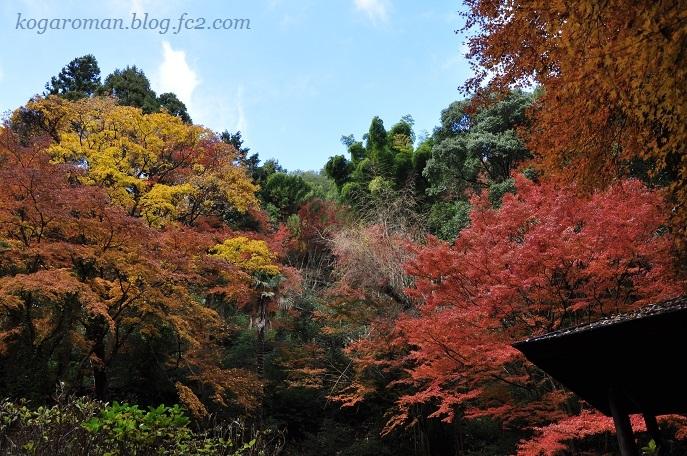 太平山の紅葉8