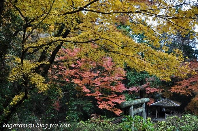 太平山の紅葉9