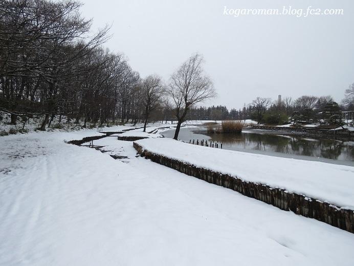 古河総合公園の雪2