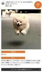 1025_dog.jpg