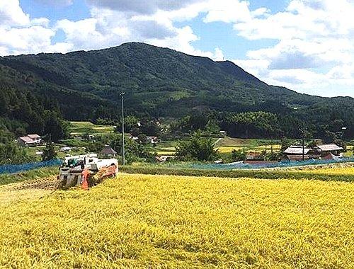 実りの田園004