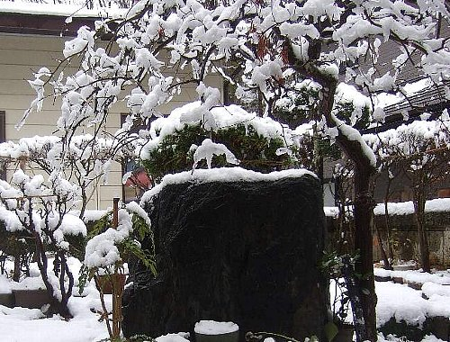 初雪001