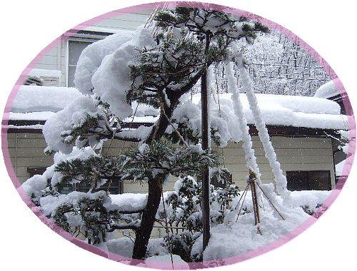 今朝の雪002