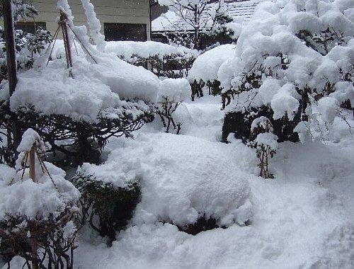 今朝の雪001