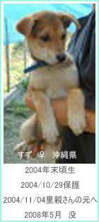 132704172232513112486_suzu_5.jpg