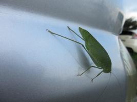 9月の緑虫、車に
