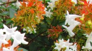 10月の小花