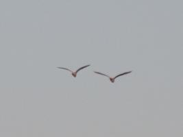 空に比翼の鳥