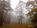 1000m林道-1
