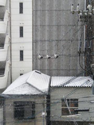 積雪 2018年1月26日