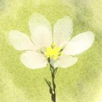 花樫(シガハナコ