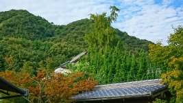 裏のお寺のイチョウDSC_0007