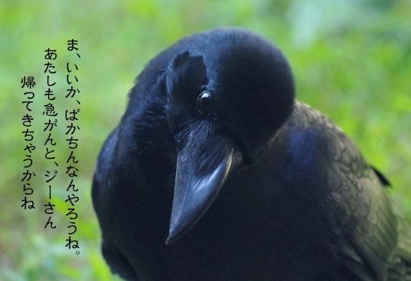カラスのきーちゃん 福岡市動物園