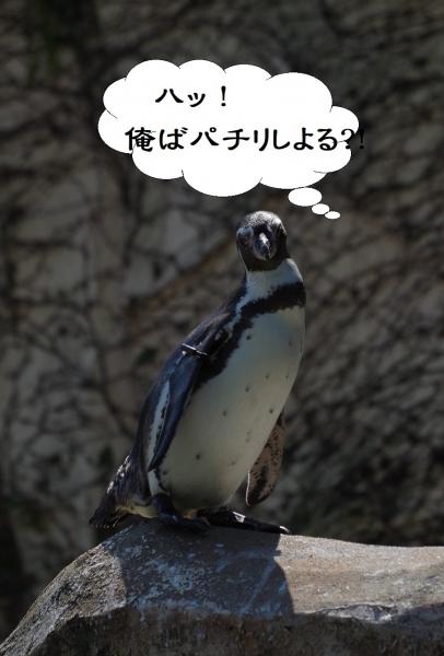 フンボルトペンギン 福岡市動物園