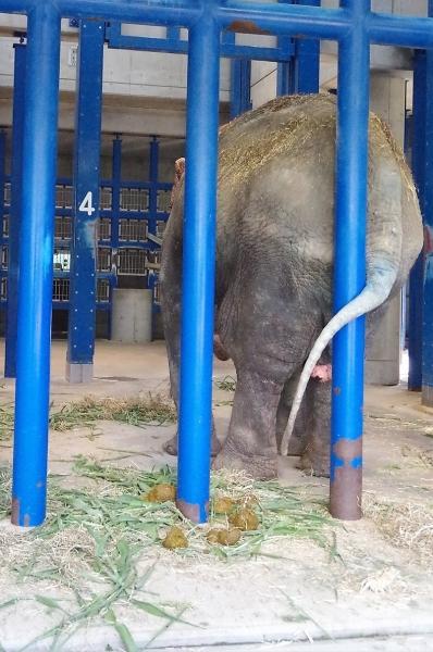 象のはなこさん 福岡市動物園