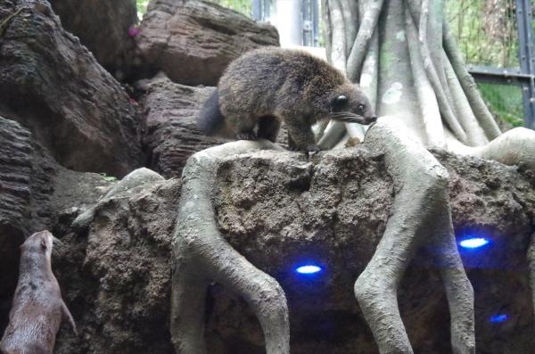 ビントロング チビントロング 福岡市動物園 コツメカワウソ 混合飼育 獣舎