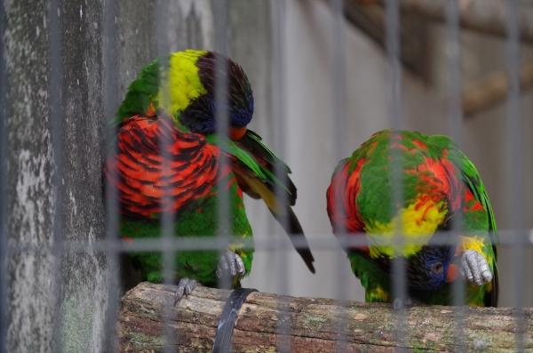 福岡市動物園の鳥