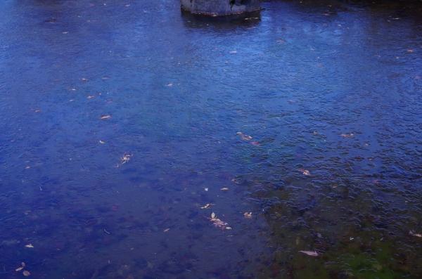 ふれあいゾーン 富士サファリ 凍った池