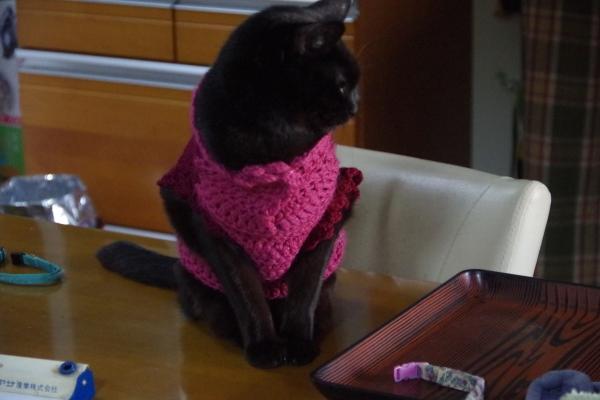 きなみちゃん 猫服 猫の洋服