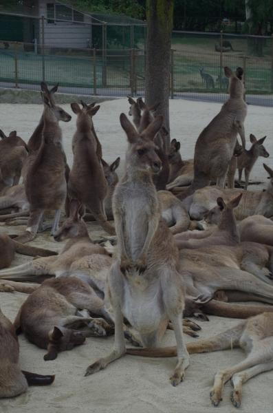 響灘グリーンパーク カンガルー広場にて 北九州市