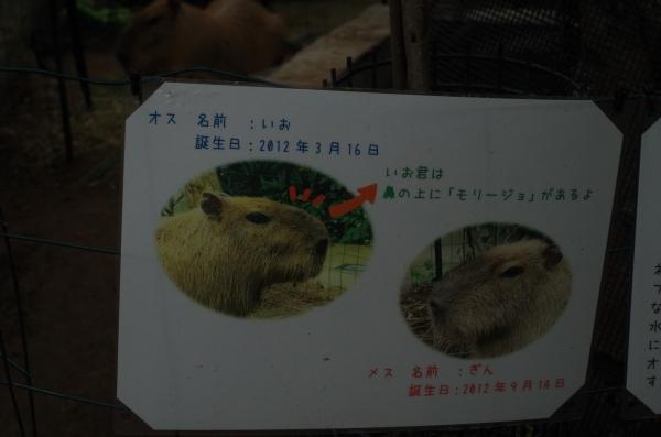 響灘緑地グリーンパーク いお君 ギンちゃん 元長崎バイオパーク