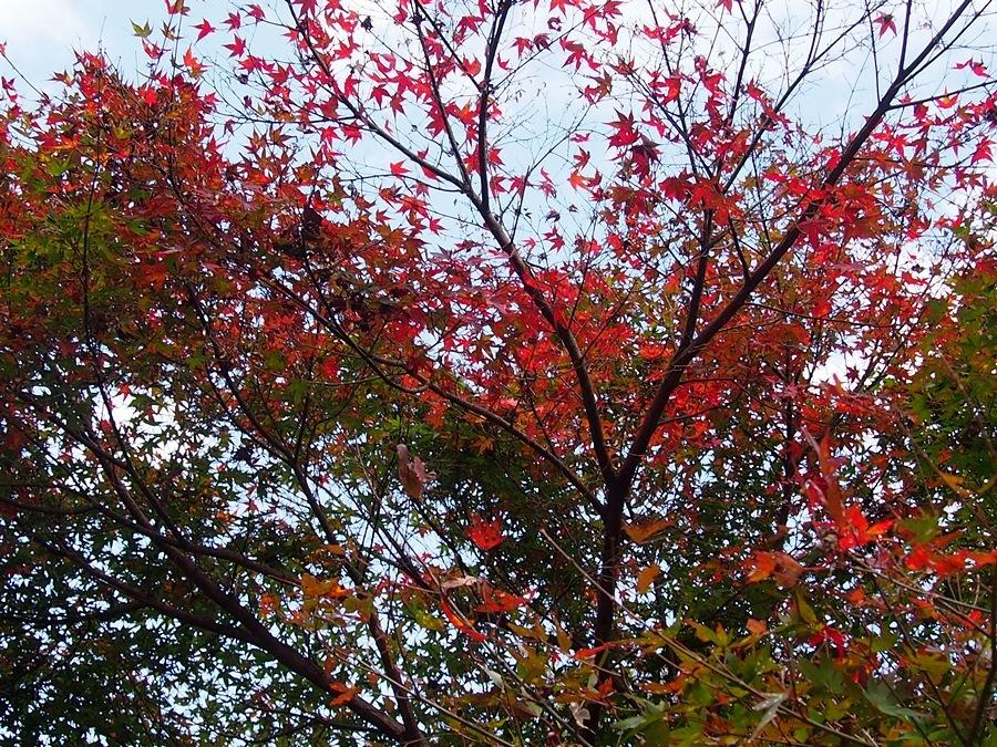 fudou-20171112-11.jpg
