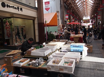 kochi46.jpg