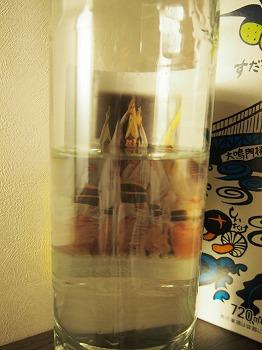 tokushima78.jpg