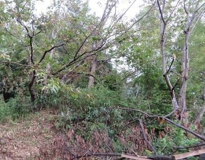 台風21号、樹木・1