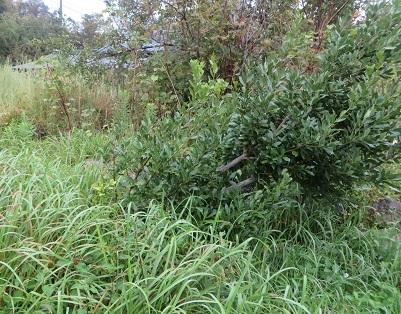 台風21号、樹木・2