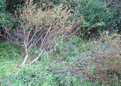 台風21号、樹木・3