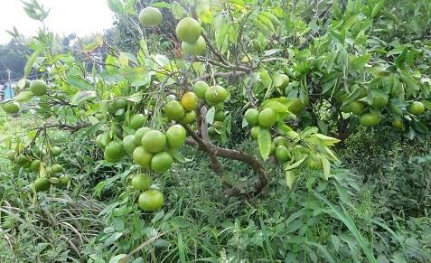 台風と作物・2