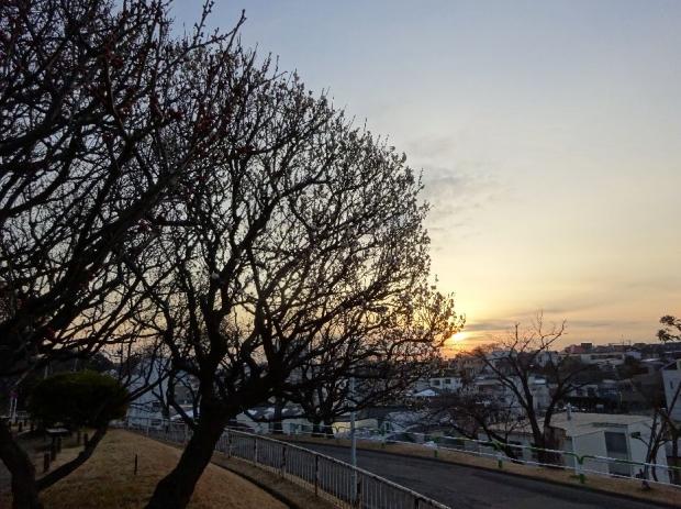 梅の花@赤羽台 (12)