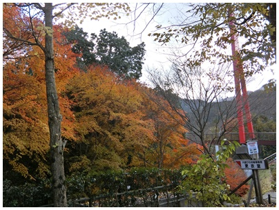 霧の森紅葉8