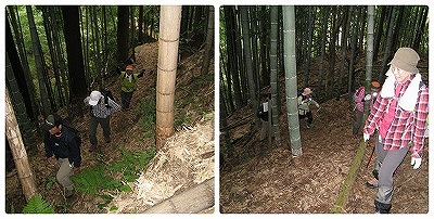 collage_photocat05.jpg