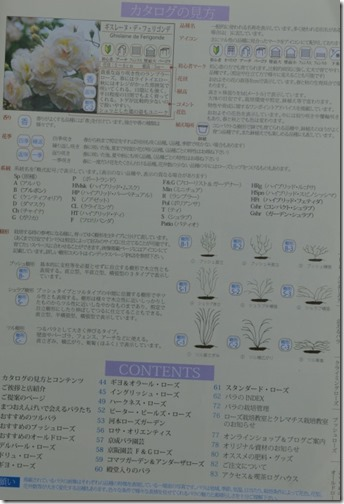 DCS_9231