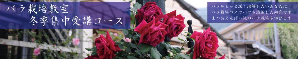 rose_se1119.jpg