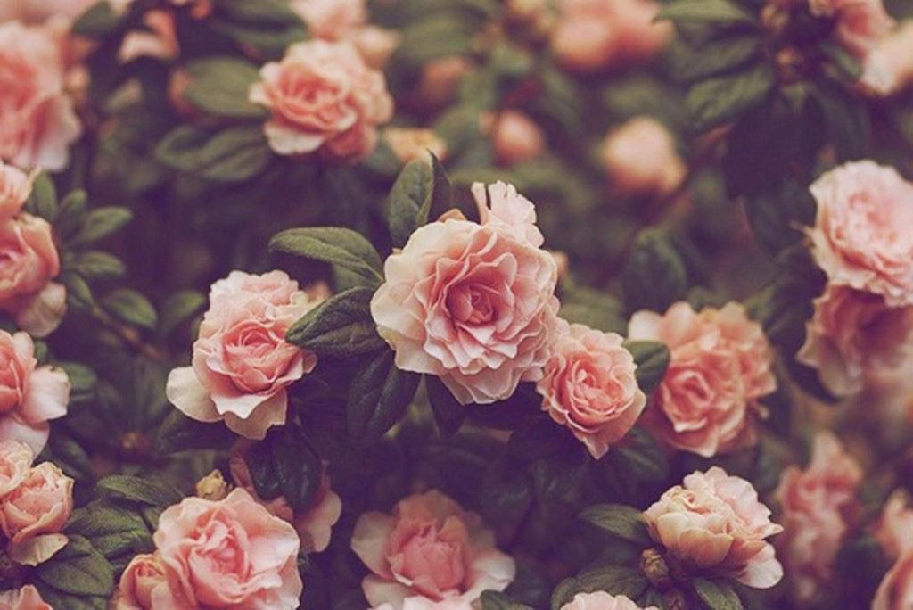 37080597-vintage-flower-wallpaper.jpg