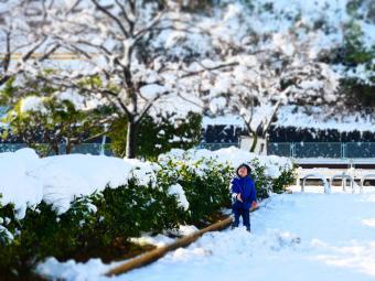 大雪一夜明けて5
