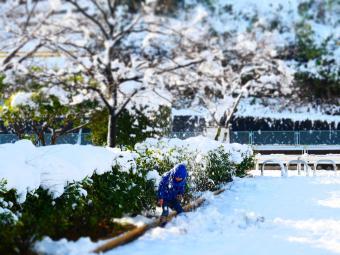 大雪一夜明けて6