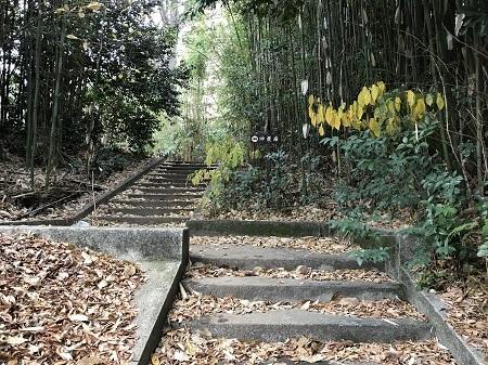 湯島聖堂 御茶ノ水 2018 鍼2 東京鍼灸