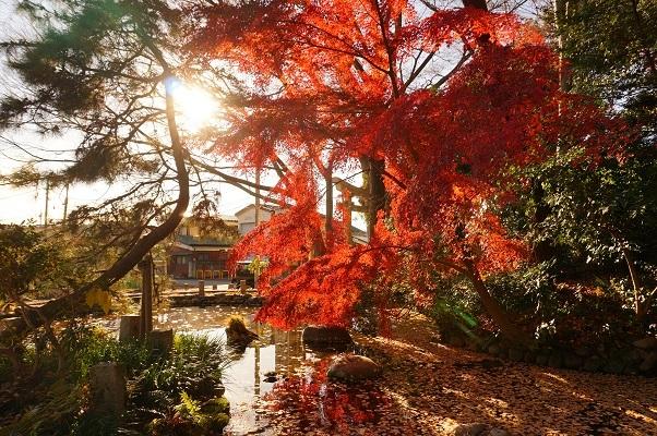 13 拝島大日堂仁王門横の池