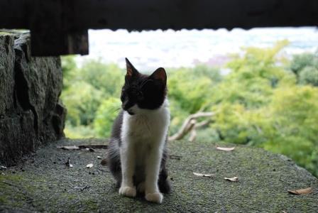 伏見 猫 ゆき