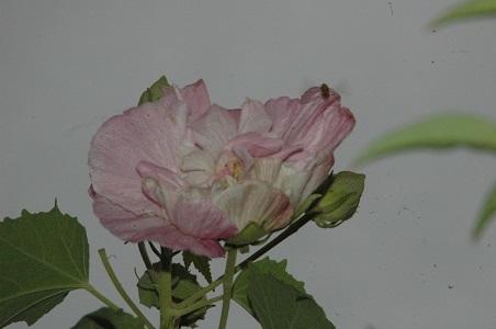 927-a.jpg