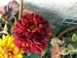 花18019