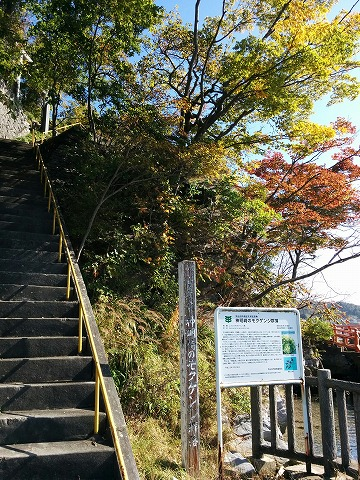20181025IMG_20181025_103944神社階段