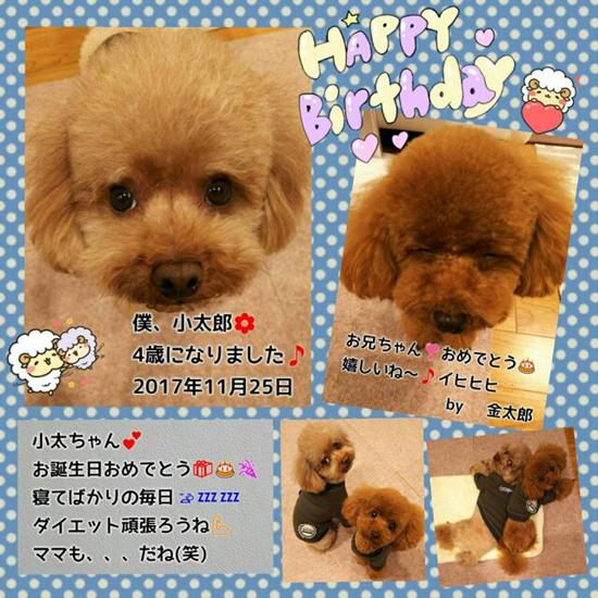 20171125小太郎金太郎