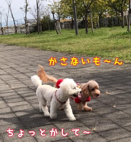 image1100203a.jpg
