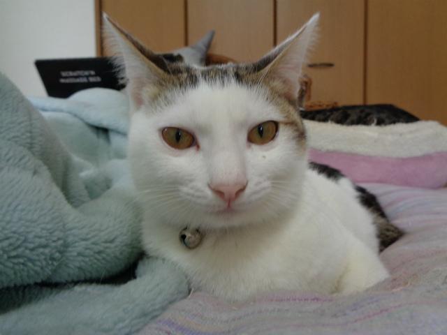 daichi0030.jpg