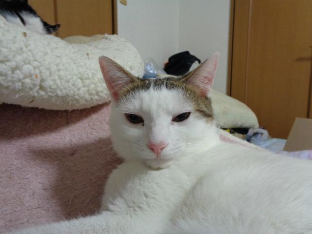 daichi0046.jpg